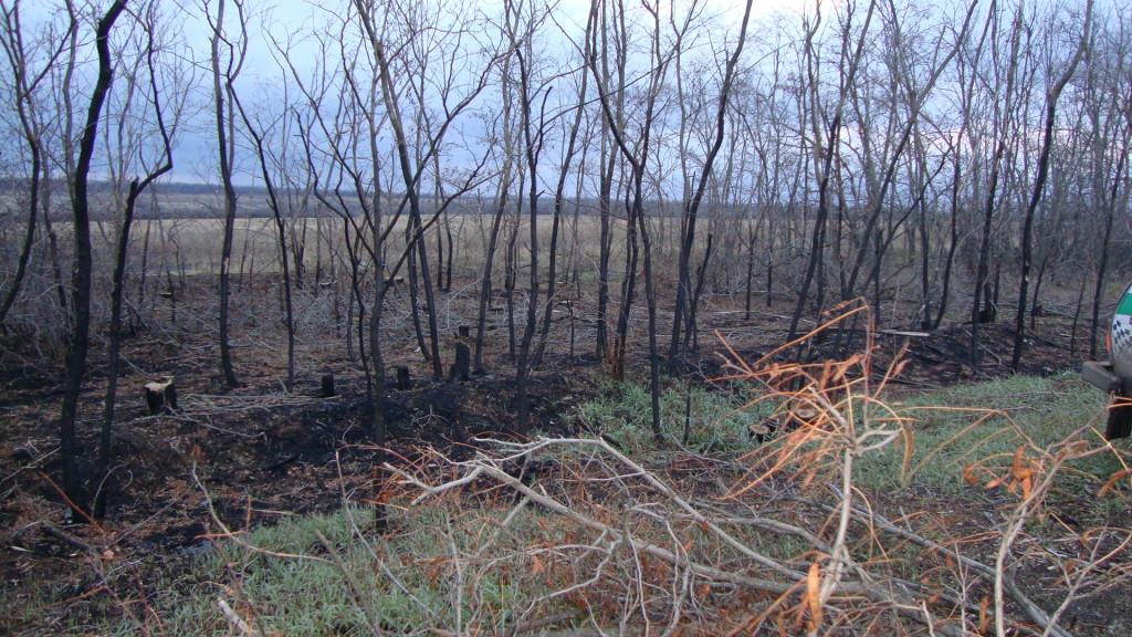 лесной пожар, горелый лес,